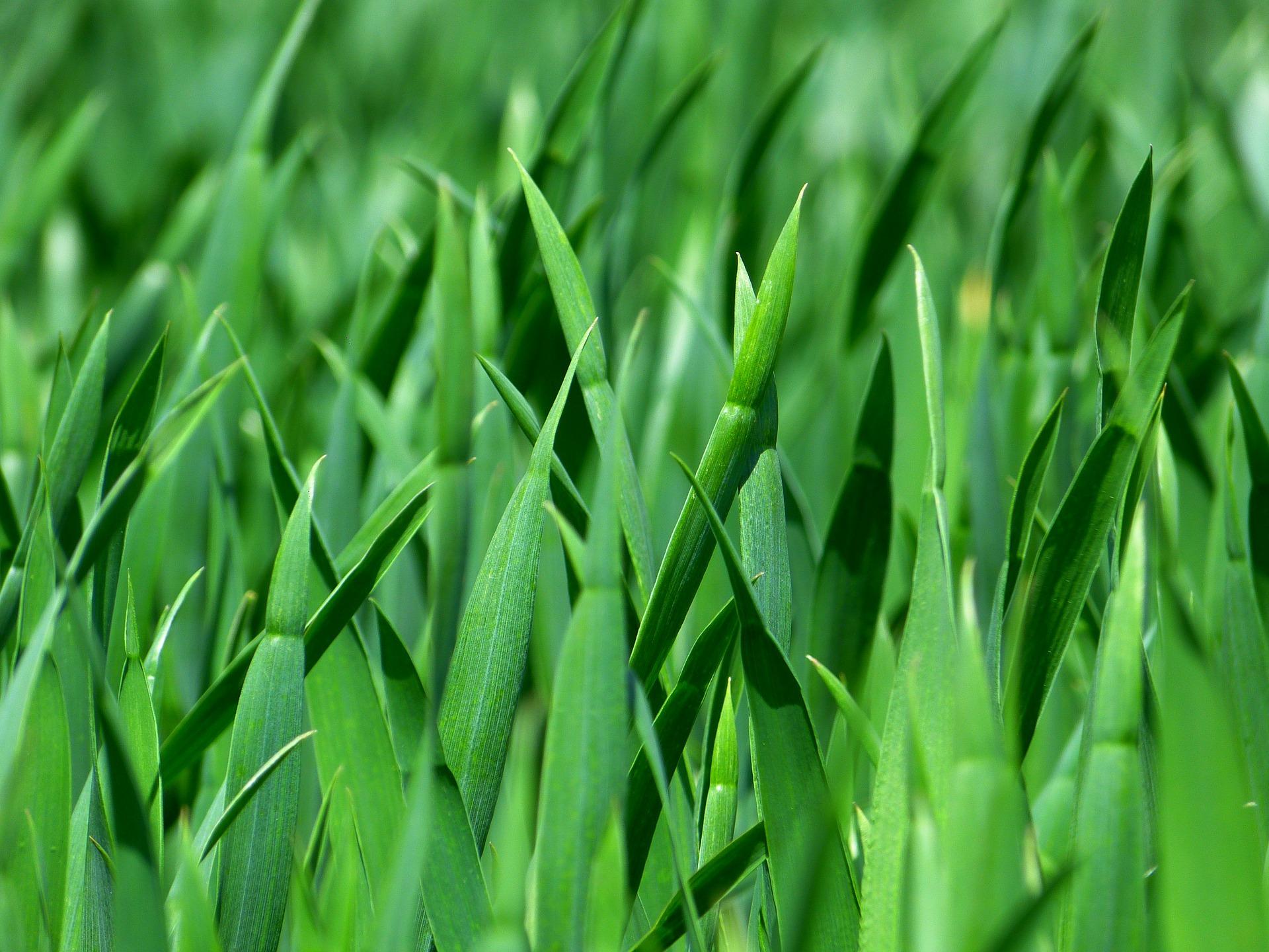 Jak pečovat o trávník po zimě