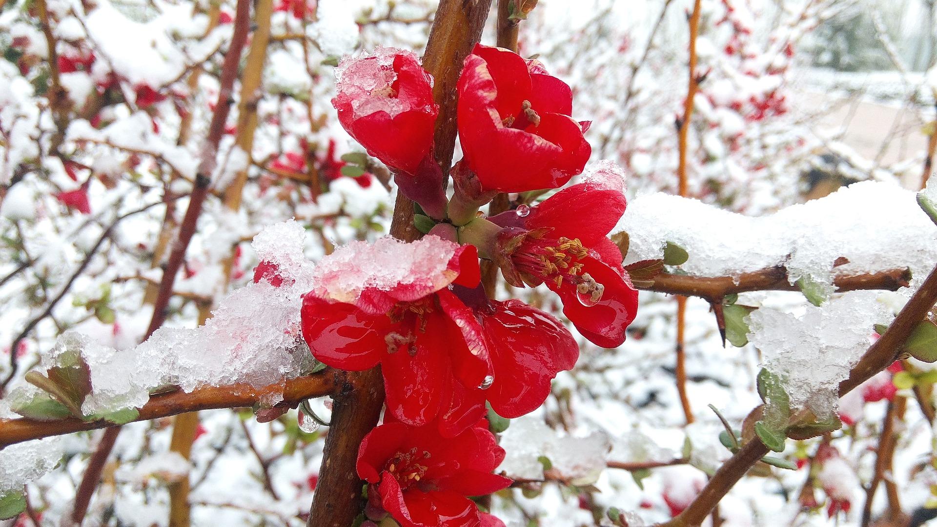 Jaké květiny v zimě pěstovat v bytě