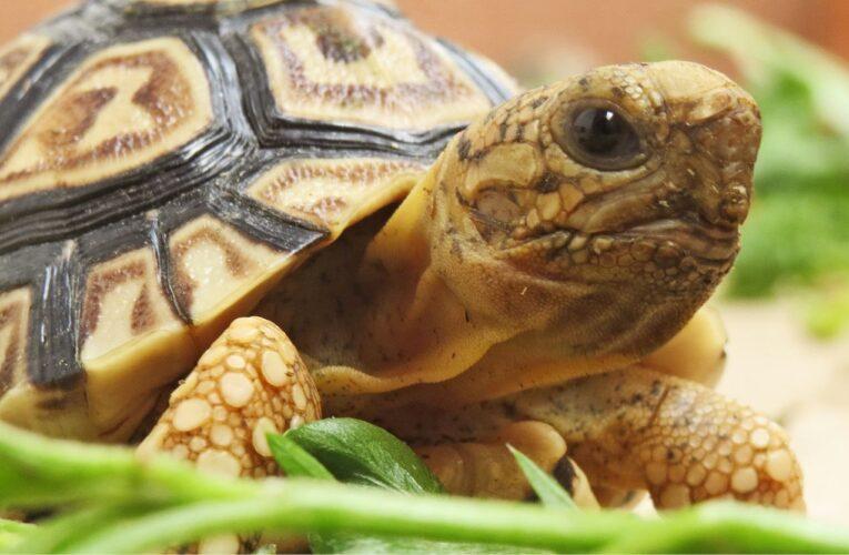 Terária pro suchozemské želvy